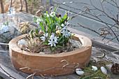 Blausternchen und Schneeglöckchen in Holzschale