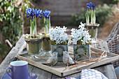 Frühlings-Arrangement mit Netziris und Blausternchen