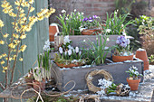 Frühlings-Arrangement mit Zwiebelblumen und Schnee