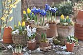 Blau-gelbes Vorfrühlings-Arrangement mit Iris und Tulpen