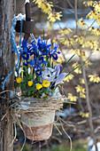 Topf mit Iris und Winterlingen an Pfosten im Garten