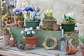 Frühlings-Arrangement mit Krokussen, Blaustern, Iris und Tulpen