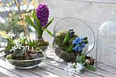Frühlings-Bepflanzung in Glas-Schalen