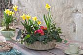 Frühlings-Schale mit Narzissen und Primeln