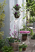 Frühlings-Terrasse mit violett-weißer Bepflanzung