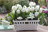 Weiße Tulpen 'White Dream' im weißen Korb