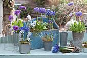 Frühlings - Arrangement mit Primeln, Krokus und Netziris