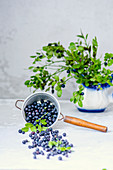 Blueberry with leaves in a sieve and a jug
