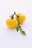 'Golden Queen' (tomato variety)