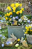 Osterkorb mit Narzissen und Tulpen