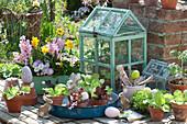 Frühlings-Arrangement mit Salat Jungpflanzen und Blumen
