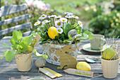 Gänseblümchen und Salat als Osterdeko