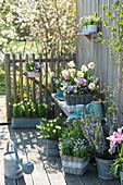 Frühlings - Arrangement auf Terrasse