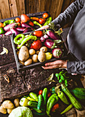 Farmers hands with freshly harvested vegetables