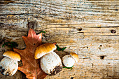 Autumn Cep Mushrooms on wood