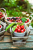 Freshly harvested cherries and berries on a garden table