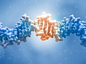 DNA editing, conceptual illustration