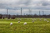 Petrochemical works on Deeside, UK