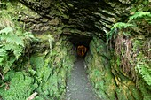 Roman adit entrance at Dolaucothi Gold Mines, Wales, UK
