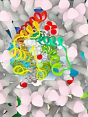 Nemonapride in complex with dopamine receptor, illustration