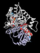 Resveratrol inhibiting quinone reductase 2, illustration