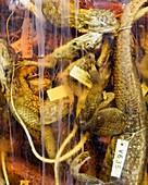 Preserved lizards