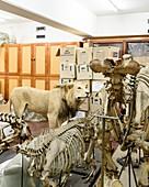 Copenhagen Zoological Museum, Denmark
