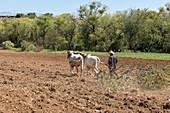 Farming in Oaxaca, Mexico