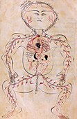 Mansur's Anatomy, 15th century
