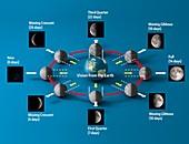 Lunar cycle, illustration
