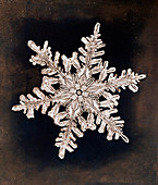 Snowflake, photographed by Wilson Bentley