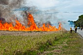 Controlled brush fire, Florida, USA