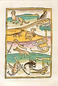 Hybrid and mythological creatures, 15th century