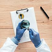 Laboratory technician analysing petri dish