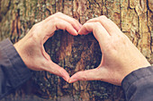 Hands making heart sign against tree trunk
