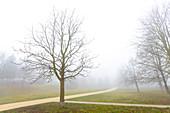 Foggy city park