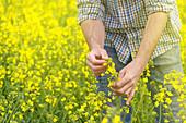 Farmer checking oilseed rape crop