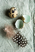 Quail egg, broken shell and feather on duck-egg green linen
