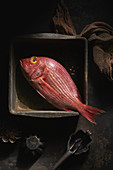 Red Snapper in alter Metallform