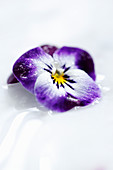 An edible violet iced flower