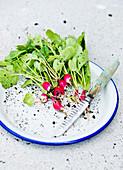 Bio-Radieschen mit Blättern auf Teller