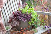 Blattschmuck - Pflanzen im Topf
