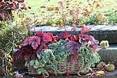 Herbst-Kasten rotblättrig und silbergrau bepflanzt