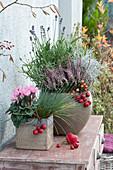 Herbst-Arrangement mit Alpenveilchen, Heide und Lavendel