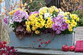 Trio Chrysanthemen im Holzkasten