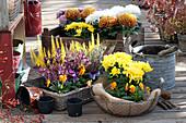 Herbst mit Chrysanthemen und Heide