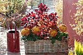 Kasten mit Deko-Chrysantheme und Perückenstrauch