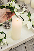 A white poinsettia stalk heated over a candle flame