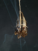 Fish on a rope with smoke