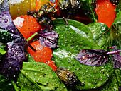 Paprikasalat mit Spinat und Basilikum (Nahaufnahme)